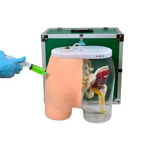 Simulador De Injeção Intramuscular No Glúteo E Visualização Óssea, Muscular E Nervosa - Sdorf Scientific