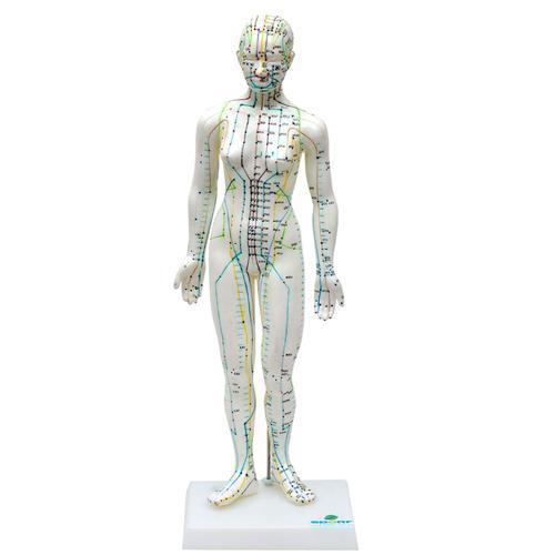 Modelo Anatômico De Acupuntura Feminino De 50Cm - Sdorf Scientific