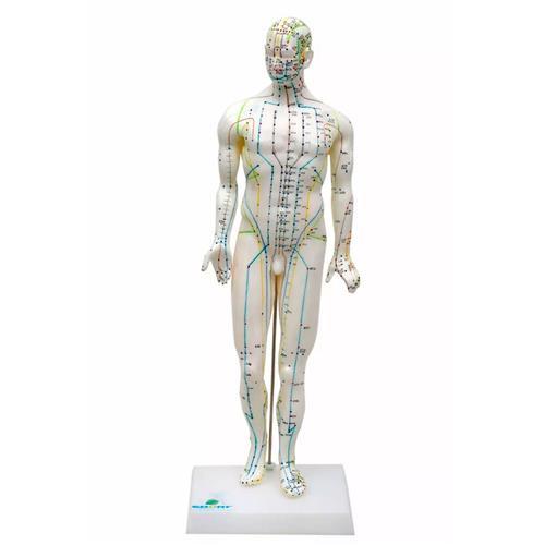 Modelo Anatômico De Acupuntura Masculino De 50Cm - Sdorf Scientific