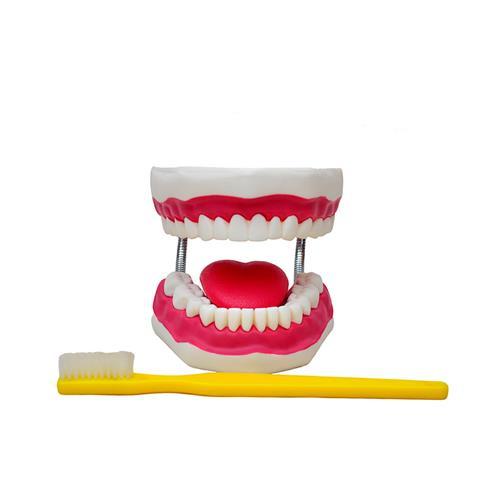 Arcada Dentária Gigante Com Língua E Escova - Sdorf Scientific